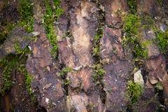 青苔的纹理在木头的 免版税库存图片