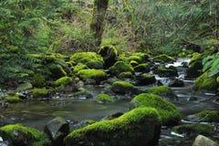 青苔盖了在森林小河的岩石 库存照片