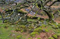 青苔盖了山保护矿工的村庄, Hafod y Llan的废墟的橡树 免版税库存图片
