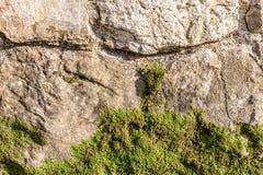 青苔盖的老石墙 库存照片