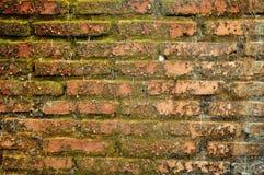 青苔砖墙纹理难看的东西摘要&背景 库存照片