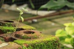 青苔种植纹理 图库摄影