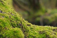 青苔结构树 免版税图库摄影