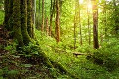 青苔结构树 库存图片