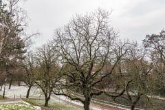 青苔绿的树在上部城市,布拉格,捷克 免版税库存图片