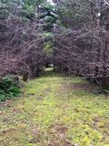青苔被盖的路通过森林 免版税图库摄影