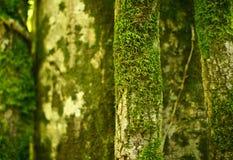 青苔隐蔽的热带树 库存图片