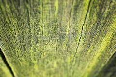 青苔细节在木篱芭的 免版税库存图片