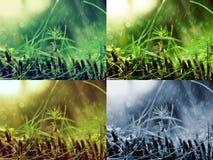 青苔细节在雨天 免版税图库摄影