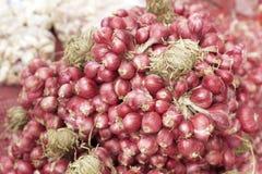 青葱-亚洲红洋葱 免版税库存照片