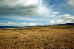 青藏高原的,中国高山草原 免版税库存照片