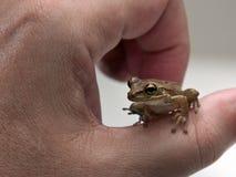 青蛙一点 图库摄影