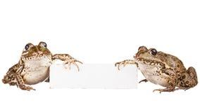 青蛙二 库存图片