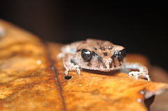 青蛙休息 图库摄影