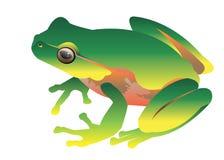 青蛙传染媒介蟾蜍绿色小例证 库存图片