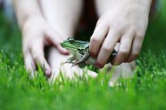 青蛙作用 库存照片