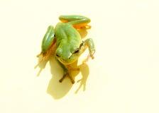 青蛙你好 库存图片