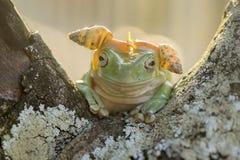 青蛙使用的帽子蜗牛 免版税库存图片
