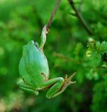 青蛙停止 免版税库存照片