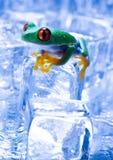 青蛙冰 库存图片