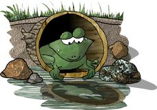 青蛙反映s 库存例证