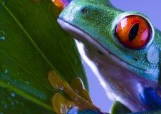 青蛙叶子 免版税库存图片
