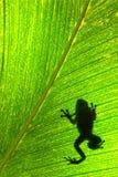 青蛙叶子 库存图片
