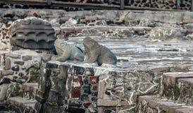青蛙和蛇顶头雕塑在阿兹台克寺庙Templo市长特诺奇提特兰-墨西哥城,墨西哥废墟的  库存图片