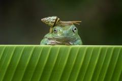 青蛙和蜗牛 库存图片