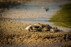 青蛙和鱼 图库摄影