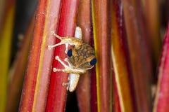 青蛙在准备好的树栖息跳 免版税库存图片