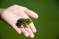 青蛙在手边在池塘 免版税图库摄影