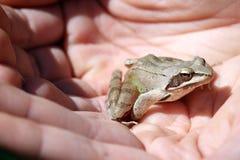 青蛙在手边 免版税库存照片