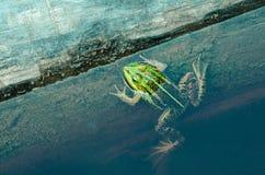 青蛙在湖 免版税图库摄影
