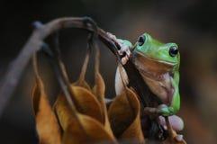 青蛙在Auntumn 库存照片