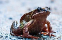 青蛙坐混凝土 库存照片