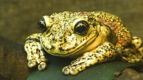 青蛙坐叶子 股票视频