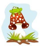 青蛙坐在蓝天的一个蘑菇 免版税库存照片
