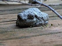 青蛙坐门廊 库存图片