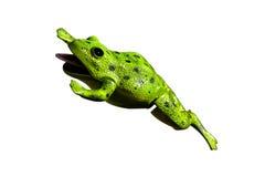 青蛙塑料 免版税库存照片