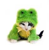 青蛙小猫 库存图片