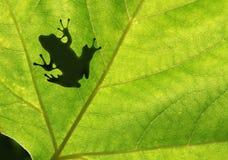 青蛙影子 库存图片