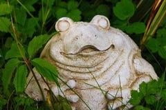 青蛙或蟾蜍 库存图片