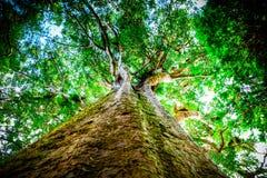 青蛙景色到一棵老树的树上面里在森林里 免版税库存照片