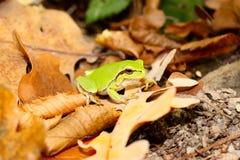 青蛙木头 库存照片