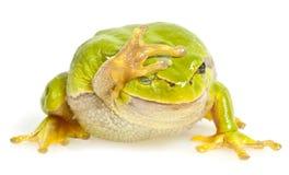 青蛙查出的结构树 库存图片