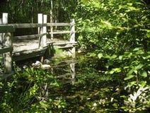 青蛙池塘 免版税库存图片
