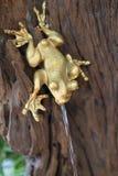 青蛙浪花水 库存图片