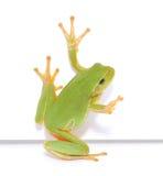 青蛙消息 库存图片