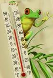 青蛙温度计 库存照片